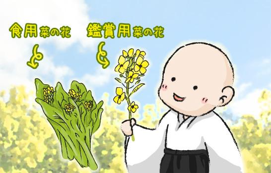 菜の花の昆布〆辛子酢味噌がけイラスト